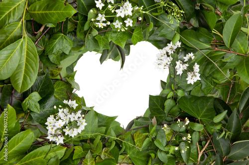 Hojas De Hiedra Húmedas Y Flores Blancas En Forma De Corazón Buy