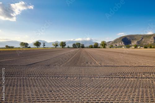 Fotografia, Obraz  terreno agricolo pronto per la semina