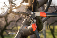 Pruning Fruit Trees With Pruni...