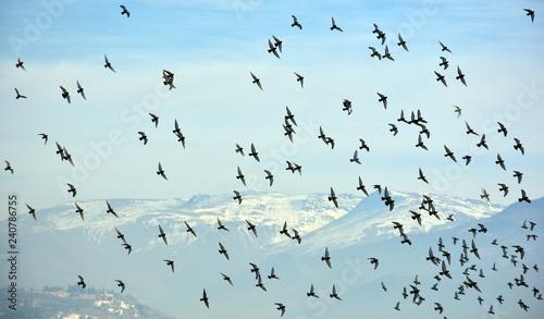 Fotografie, Obraz  Pájaros en el cielo