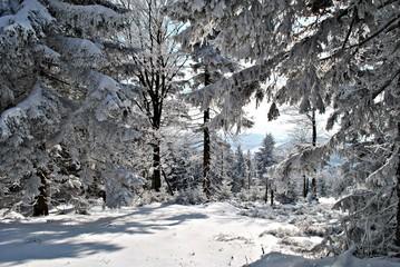 Fototapeta Do gabinetu lekarskiego/szpitala Las w zimie