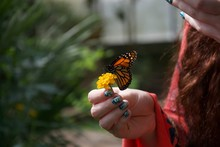 An Orange, Black And White Butterfly On A Yellow Flower In A Lady's Hand