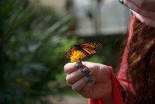 Orange, Black And White Butterfly With Open Wings On A Flower In A Lady's Hand