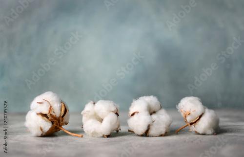Cotton flowers heads close-up. Copy space. © Dmytro
