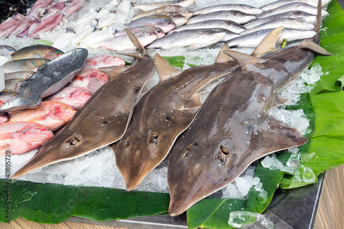Fresh Seafood Catch, Sharks and Fish on Ice for Sale on