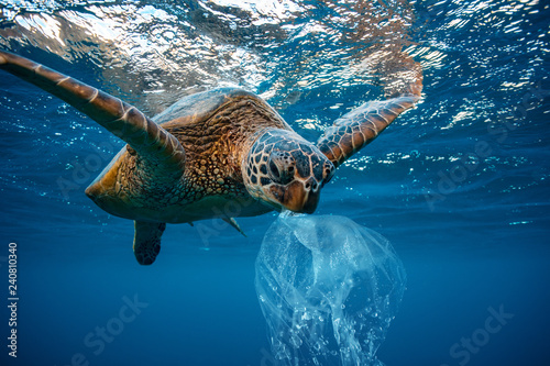 Photo sur Toile Tortue Water Environmental Pollution Plastic Problem Underwater animal