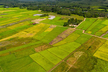 Aerial View Of Picturesque, Colorful Rice Paddys On The Island Of Koh Yao Noi In Thailand