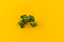 Toy Frog From Plastic On A Yel...