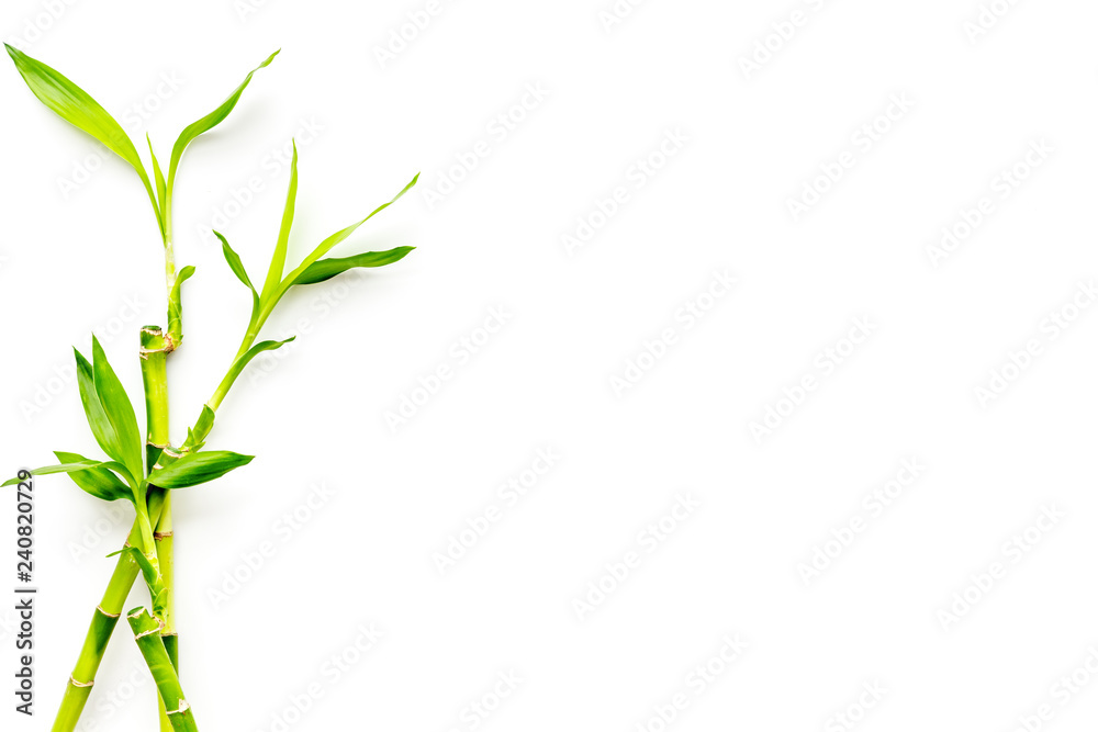Bamboo shoot. Bamboo stem and leaves on white background top view copy space
