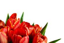 Red Tulip Flowers In A Corner