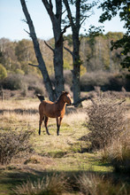 Beautiful Portrait Of New Forest Pony In Autumn Woodland Landscape With Vibrant Fall Color All Around