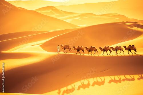 Keuken foto achterwand Kameel desert camels team