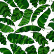 Seamless pattern of exotic,  green banana leaves, randomly scattered and isolated on a transparent background. Decorative image with tropical foliage.