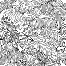 Seamless Pattern Of Exotic, White Banana Leaves With A Black Outlines Isolated On A Transparent Background. Decorative Image With Tropical Foliage.