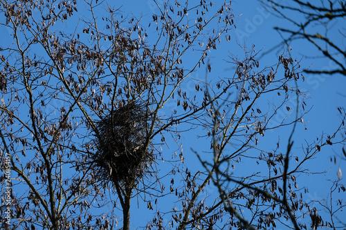 branches avec nid de pie vide, hiver, ciel bleu Tablou Canvas
