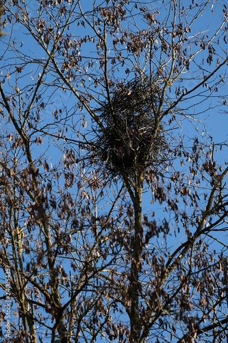 Valokuva  Nid de pie vide au sommet d'un arbre, hiver