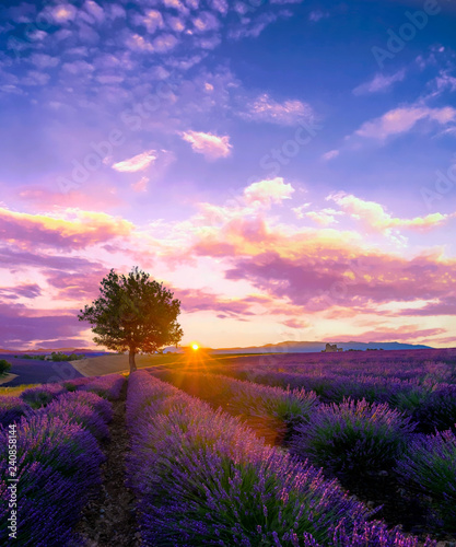 Valokuva  Tree in lavender field at sunset in Provence, France