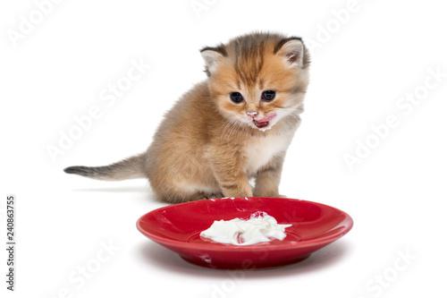 Fotografía  Little kitten eating sour cream