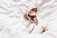 Cute Dog Sleeping And Yawning ...