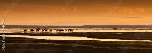 Fotobehang Inspirerende boodschap Ponies on the Loughor estuary, Swansea, Wales, UK
