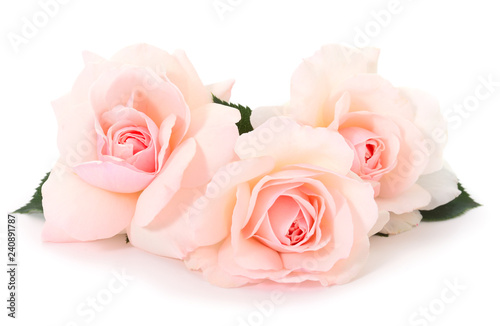 Canvas Prints Roses Pink roses flowers.