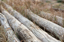 Old Logs Are Gray With Wind An...
