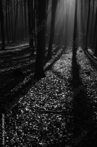 Türaufkleber Darknightsky Wald aus Buchen bei Gegenlicht