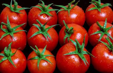 Tomate Rot Gemüse