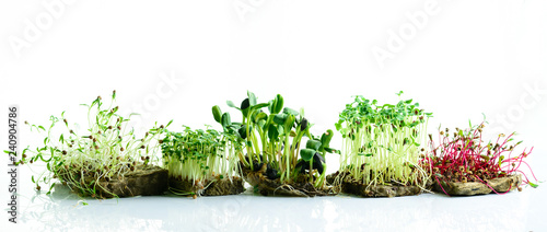Foto op Plexiglas Verse groenten microgreen dill sprouts, radishes, mustard, arugula, mustard in the range on a light background