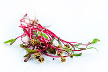 Microgreen Chard Sprouts Or Beets On A White Background