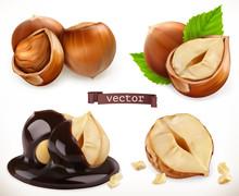 Hazelnut. 3d Realistic Vector ...