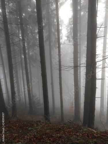 Cadres-photo bureau Foret brouillard Mist in the woods during autumn. Slovakia