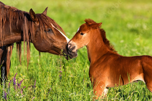 Foto Portrait of a beautiful horse foal with mother