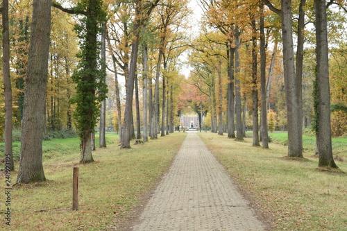 Fototapeten Natur herfstige oprijlaan bij kasteel op landgoed De Slangenburg in de Achterhoek