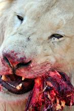Ferocious Predator, The Africa...