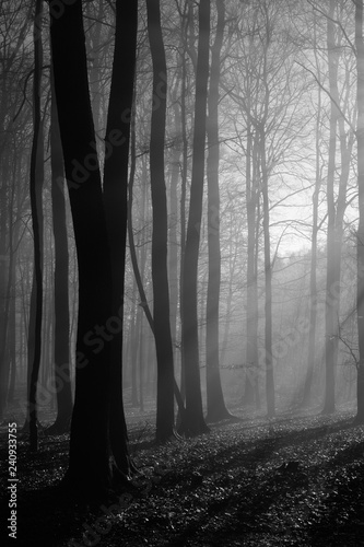 Wall Murals Forest Beech Forest with Fog and Sunlight During Winter