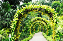 Archway Made Of Plants Surrounded By Tropical Palm Trees In The Botanic Garden, Singapore