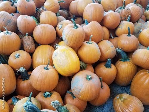Fotografie, Obraz  large pile of orange and green pumpkins