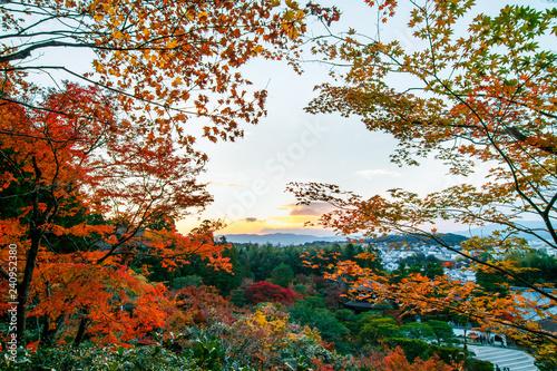 wonder garden in japan in autumn Poster Mural XXL