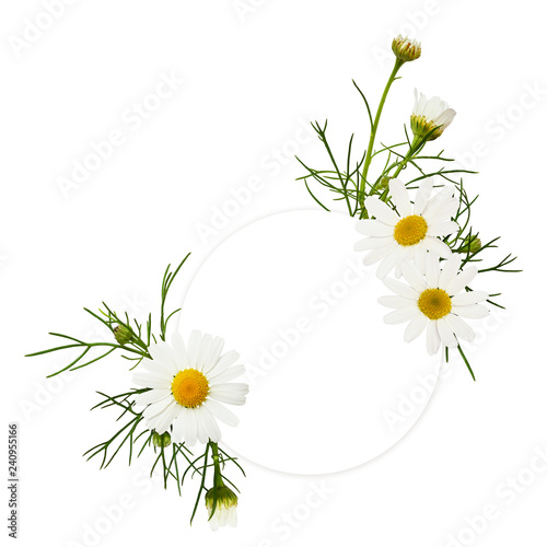 Round empty card with daisy flowers arrangements