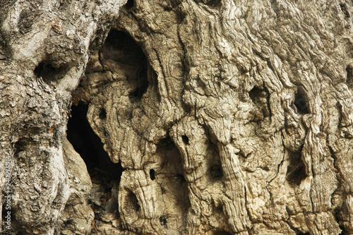 old tree bark Fototapeta
