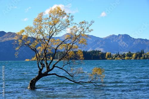 In de dag Bomen tree on lake