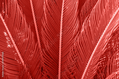 Long spiky palm tree leaves in beautiful geometrical pattern. Trendy living coral color. Botanical tropical foliage background. Template for wellness spa fashion urban lifestyle vacation concept