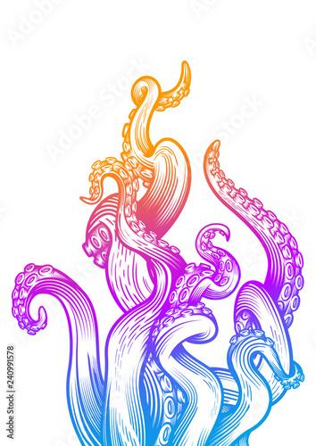Obraz na plátně Tentacles of an octopus