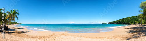 Poster Bleu Coconut trees, golden sand, turquoise water and blue sky, wonderful pearl beach , Guadeloupe, French West Indies, panoramic view