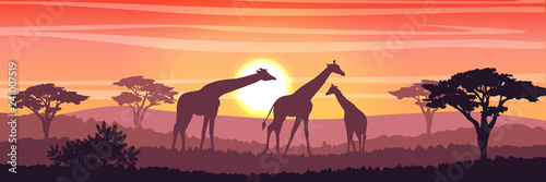 Family of giraffes in the African savanna at sunset Fotobehang