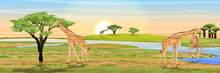 Group Of African Giraffes At The Watering Hole. African Savannah. The River Bank, Acacia And Baobabs. Realistic Vector Landscape. The Nature Of Africa. Reserves And National Parks.