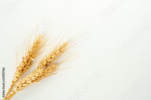 wheat spike and grains