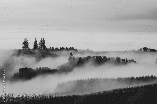 Poster Morning with fog Looking down into a valley layered in mist, evergreen trees breaking through the soft clouds.