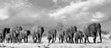 Panorama rodzinnego stada słoni spacerujących po afrykańskich równinach w Parku Narodowym Hwange, Zimbabwe, Afryka Południowa